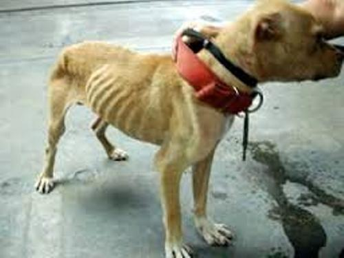 Animal Abuse Pic