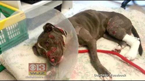 Animal Abuse Pictures