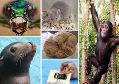 Animal Brain Pic