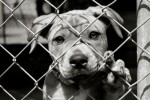 8 Facts about Animal Cruelty