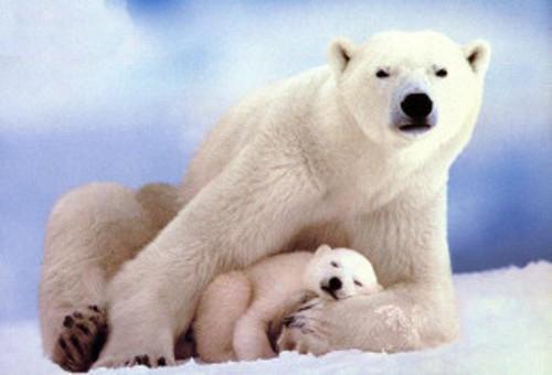 Animal Extinction Facts