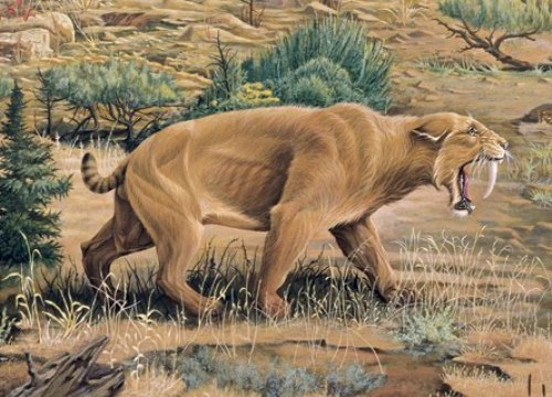 Animal Extinction Image