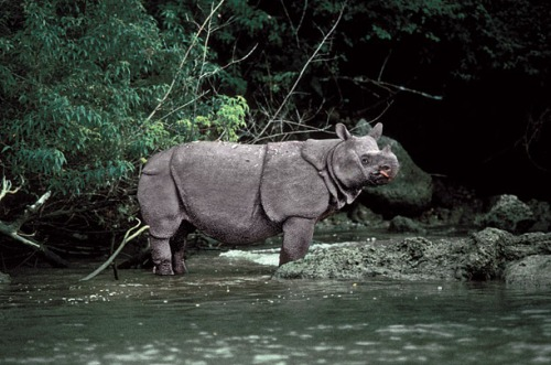 Animal Extinction Pic