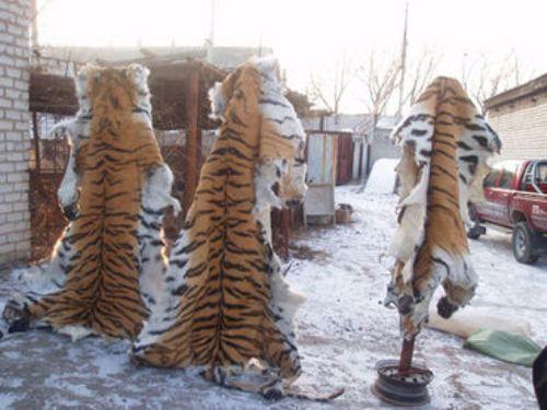 Animal Fur Pic