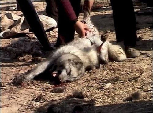 Animal Fur Skinned