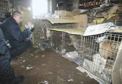 Animal Hoarding Image
