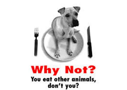 Animal Right Facts