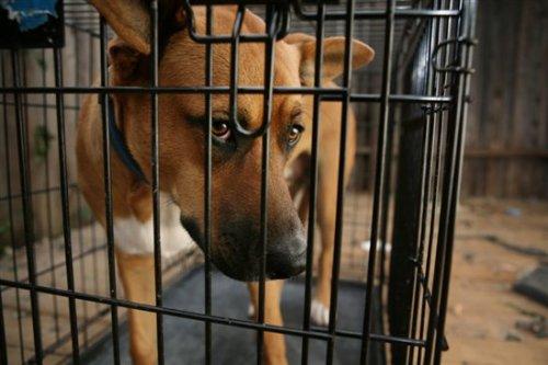 Animal Shelter Dog