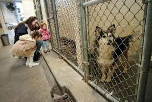 Animal Shelter Pic