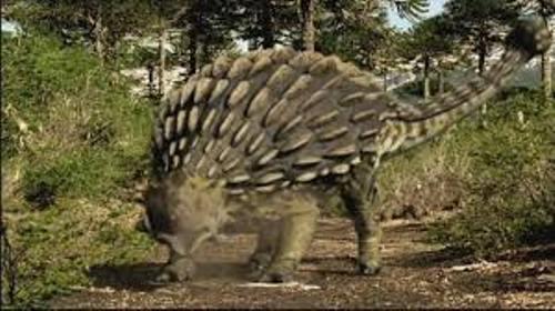 Ankylosaurus Pic