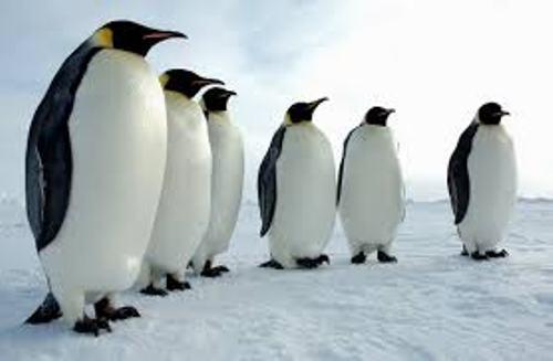 Antarctica Penguin Facts