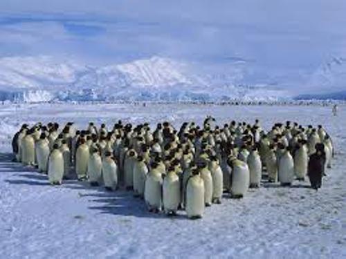 Antarctica Penguins Facts