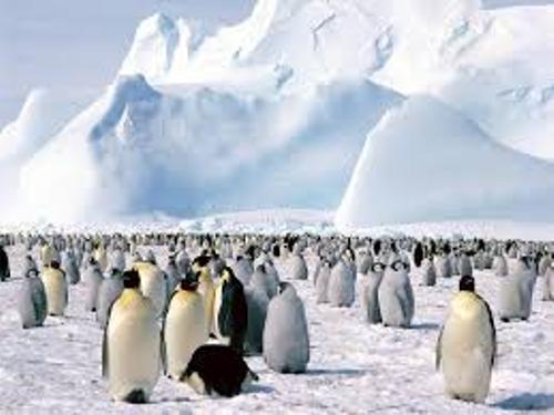 Antarctica Penguins Image