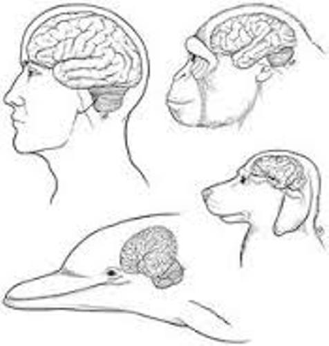 Facts about Animal Brains