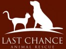 10 Facts about Animal Rescue Charities