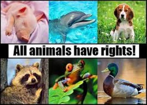 Facts about Animal Rights