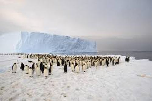 Facts about Antarctica Penguins