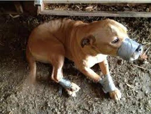 facts about Animal Abuse
