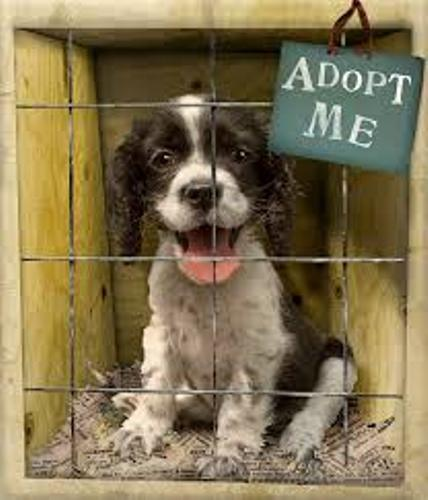 facts about Animal Shelters