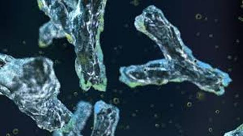 Antibodies Pictures