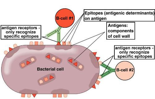 Antigen Picture