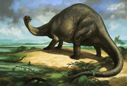 Apatosaurus Image