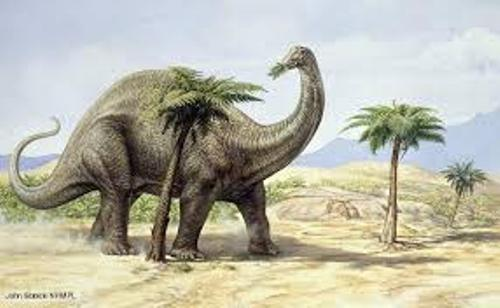 Apatosaurus Pictures