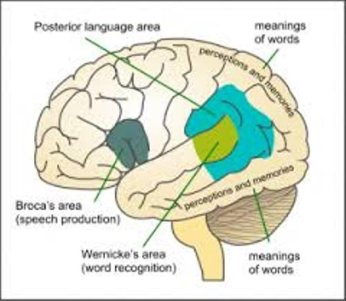 Aphasia and Brain