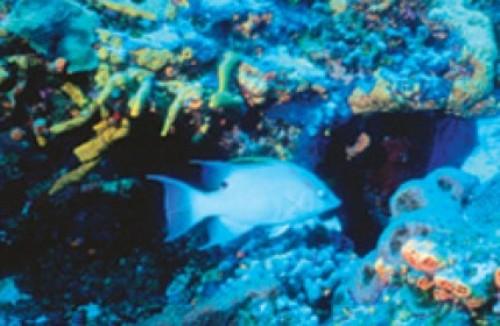 Aquatic Animal Image