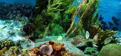 Aquatic Animal Pic