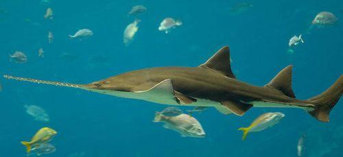 Aquatic Animal in Water