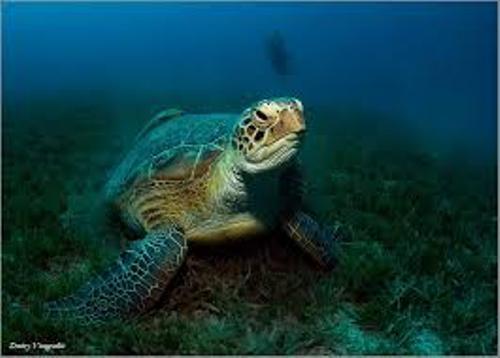 Aquatic Biomes and Animals