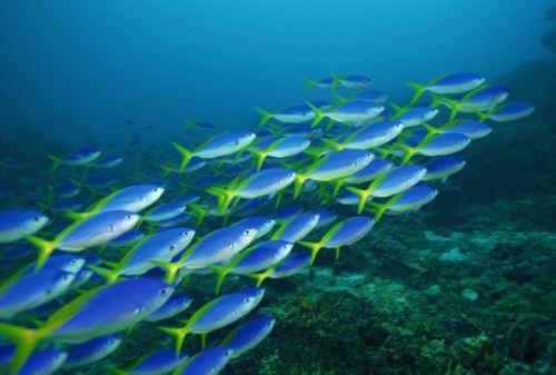 Aquatic Biomes and Fish
