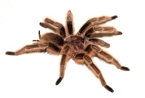 Arachnophobia Facts