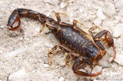 Arachnophobia Image