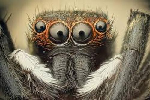 Arachnophobia Pic