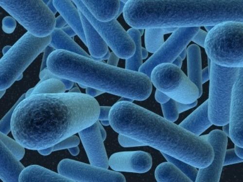 Archaea Shape