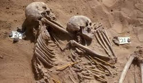 Archaeology Bones