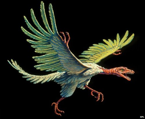 Archaeopteryx Facts