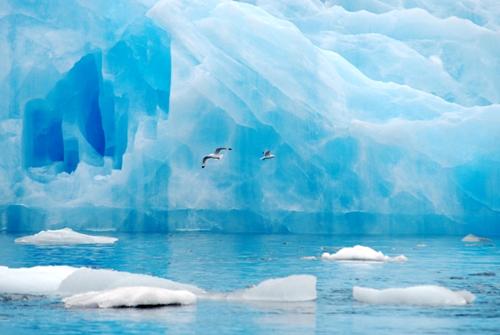 Arctic Birds