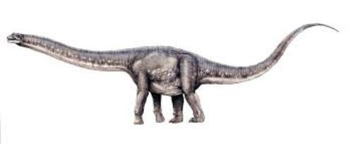 Argentinosaurus Length