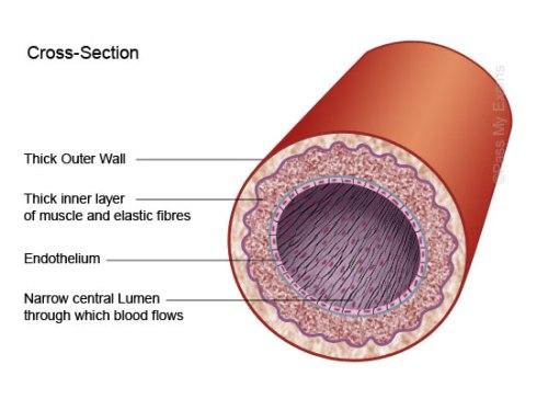 Artery Parts