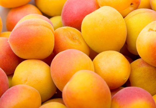 Facts about Apricot
