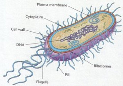 Facts about Archaebacteria