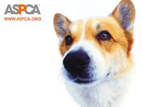 ASPCA Facts