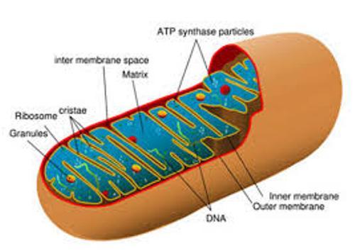 ATP Pic