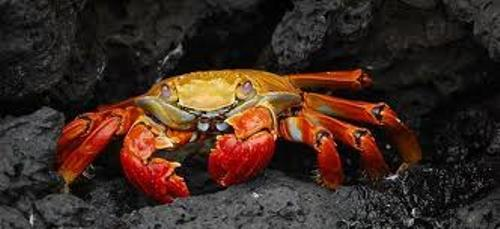 Arthropod Pic