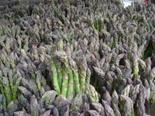 Asparagus Pic
