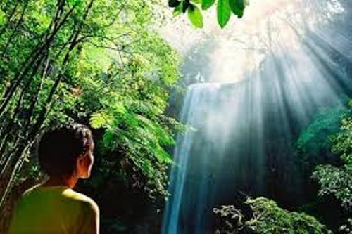 Australian Rainforest Pic