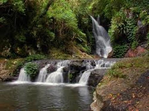 Australian Rainforest and Water